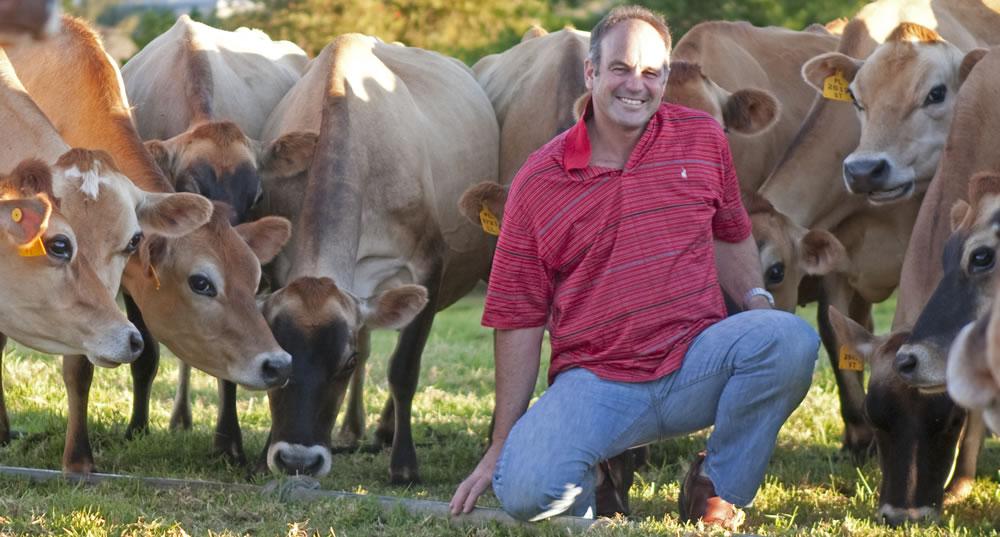 jersey-herd